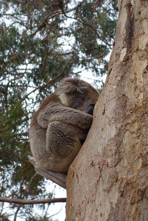 Kingscote, Australia: DSC02644_large.jpg