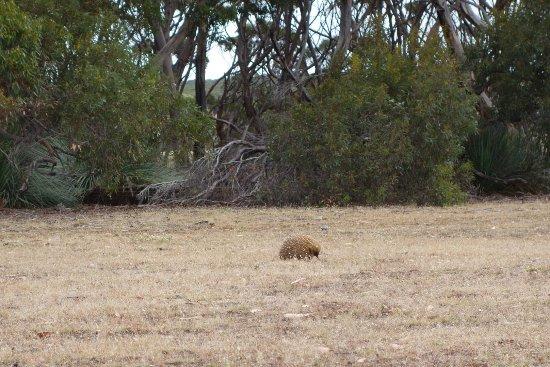 Kingscote, Australia: DSC02673_large.jpg