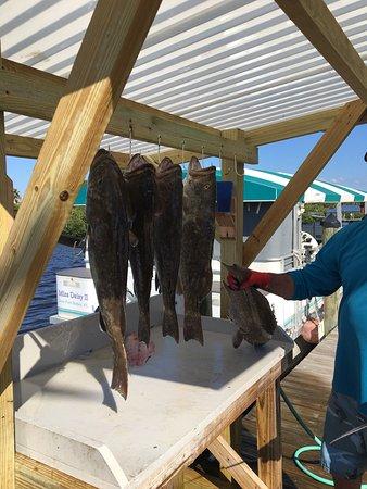 Port Richey, FL: Reef Chief