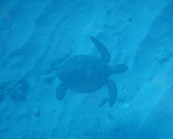 Waikoloa, Hawaï: Sea Turtle