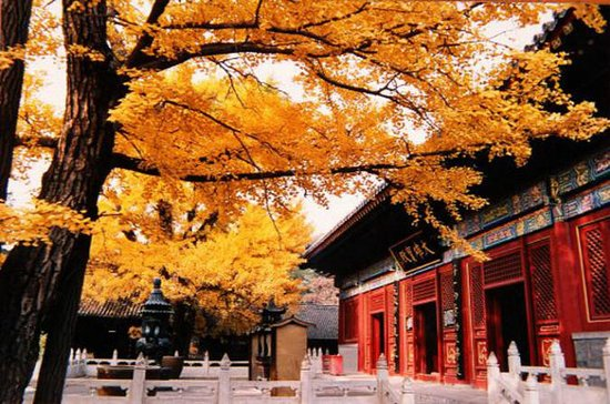 Private Transfer Service from Beijing to Mutianyu and Red Snail Temple