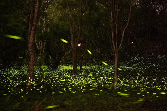 Self-Guided Tour With Private Transfer: Be Around With Fireflies And...