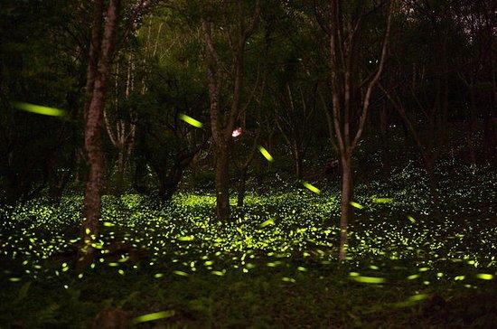 Selbstgeführte Tour mit Privattransfer: Seien Sie mit Glühwürmchen...