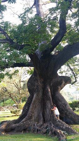 Arroyo Seco, México: Afortunada de abrazar un árbol Ceiba +500 años...