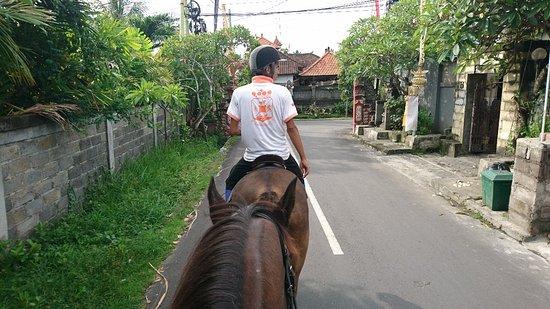 Royal Sporthorse Bali: DSC_3916_large.jpg