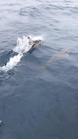 Main Beach, Australia: Trip to see the whales