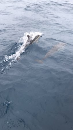 Spirit of Gold Coast Whale Watching: Trip to see the whales