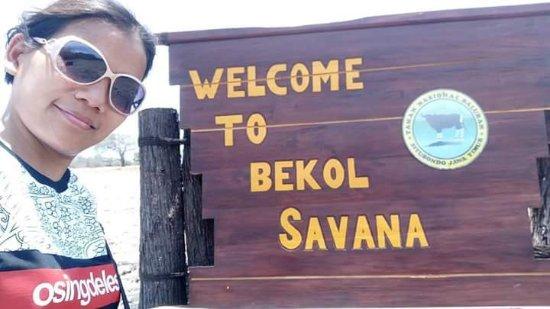 Baluran National Park : Savana Bekol