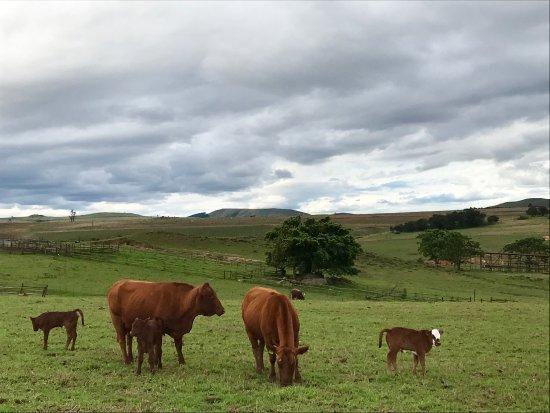 Piet Retief, Sydafrika: photo4.jpg