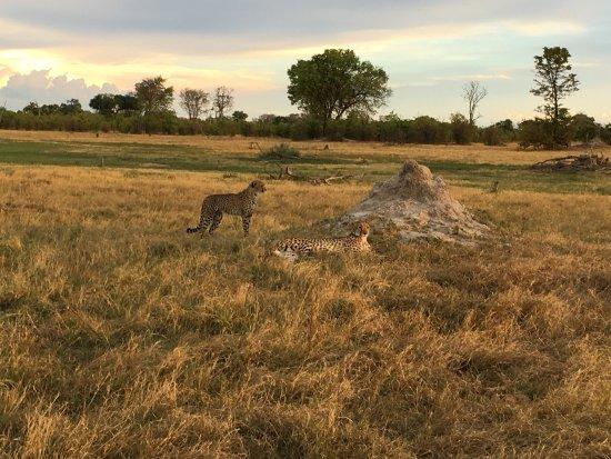 Kwara Camp - Kwando Safaris : photo1.jpg