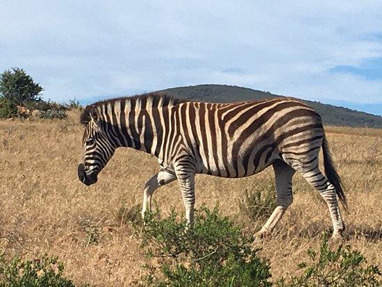 Альбертина, Южная Африка: photo3.jpg