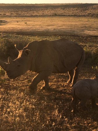 Albertina, แอฟริกาใต้: photo4.jpg