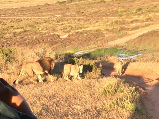 Albertina, Sydafrika: photo5.jpg