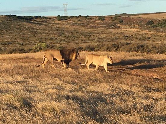 Albertina, Sydafrika: photo6.jpg