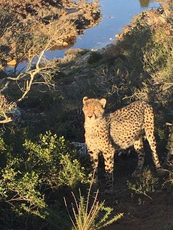 Albertina, Sydafrika: photo7.jpg