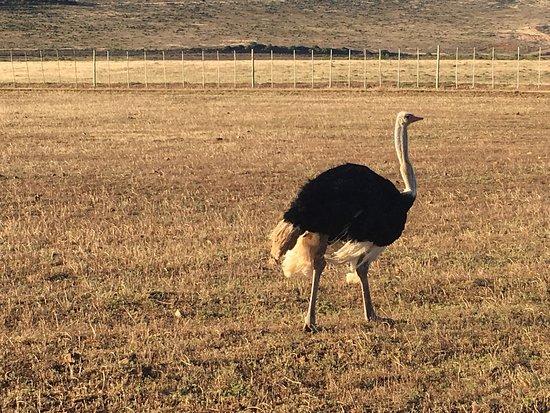 Albertina, Sydafrika: photo8.jpg