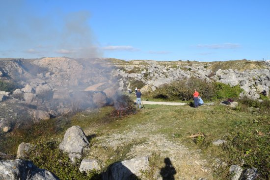 Isle of Portland, UK: Burning invasive species to allow Tout natural species to recover and establish.
