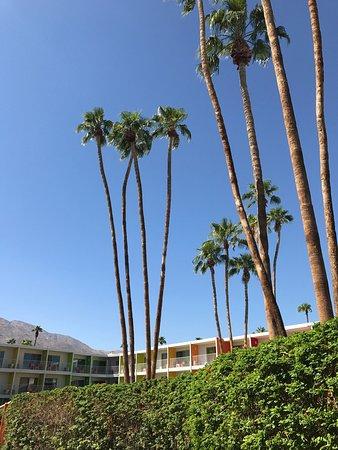 The Saguaro Palm Springs: photo0.jpg