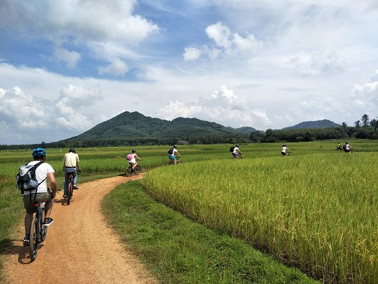 Kota Phuket, Thailand: Cycling through the rice fields of Koh Yao Noi