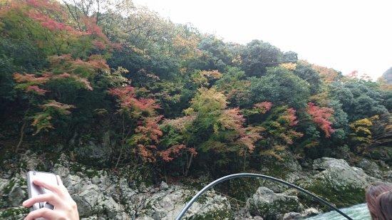Kameoka, Japan: DSC_1930_large.jpg