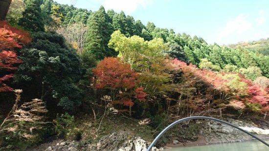 Kameoka, Japan: DSC_1932_large.jpg