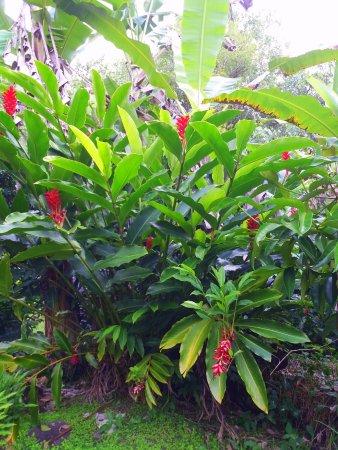Tahiti Discovery: Vallée di Papenoo