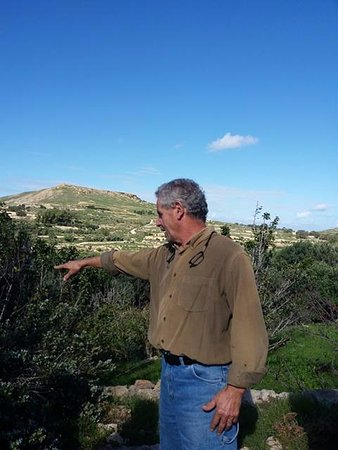 Xaghra, Malta: teaching us about olives, olive tress