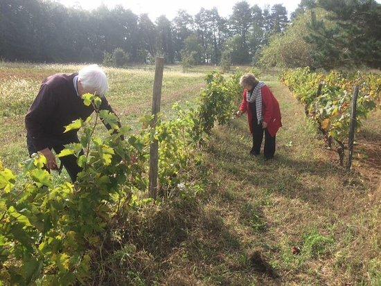 Valojoulx, فرنسا: Helping neighbours harvest 