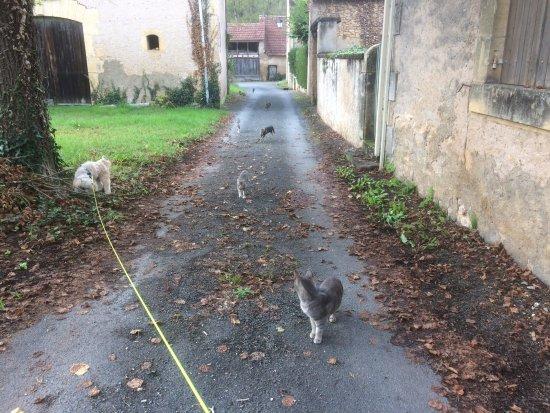 Valojoulx, فرنسا: Surroundings walking 