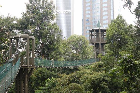 La Canopee Et Les Passerelles Photo De Kl Forest Eco Park Kuala