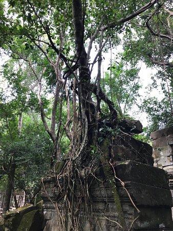 Siem Reap Province, Καμπότζη: photo7.jpg