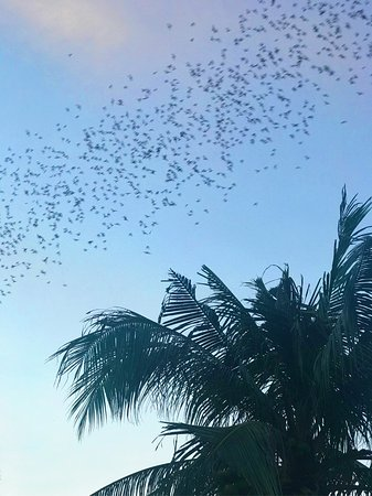 Battambang, Cambodia: Nakim took us to the bat cave to see the thousand of bats leave the cave which was pretty specia