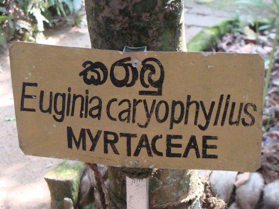 Mawanella, Sri Lanka: Spice farm