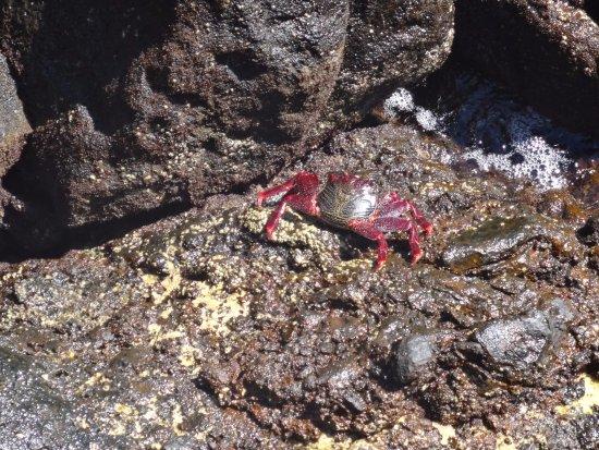 Punta Mujeres, إسبانيا: Местный крабик