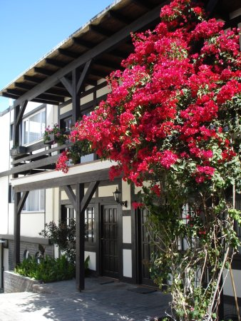 bougainvillea in bloom bild von hotel europa hof swakopmund tripadvisor. Black Bedroom Furniture Sets. Home Design Ideas