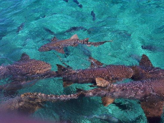 Caye Caulker, Belize: 20171116_121014_large.jpg