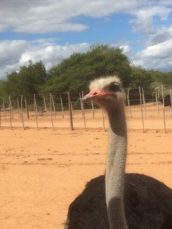 Oudtshoorn, Zuid-Afrika: photo1.jpg