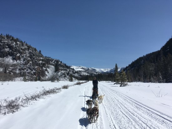 Clark, CO: Explore the beauty of Colorado by dog power.