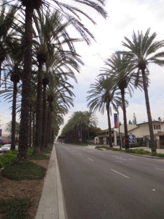 Anaheim Islander Inn and Suites: photo1.jpg