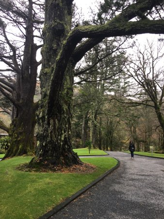 Kylemore, Ireland: jardines