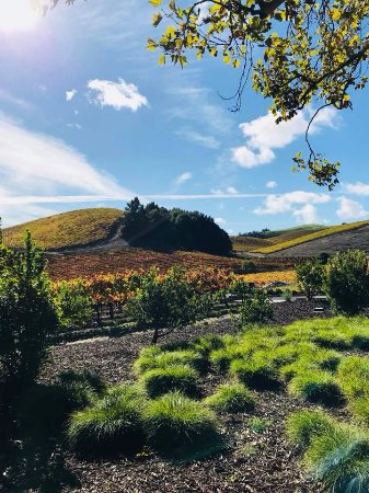 Healdsburg, CA: Gorgeous property