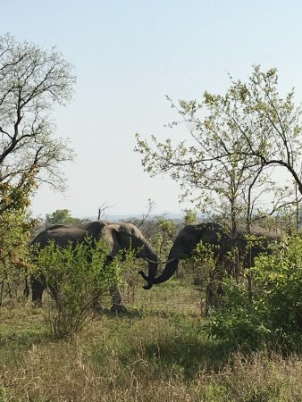 Nationaal Park Kruger, Zuid-Afrika: Memories for ever