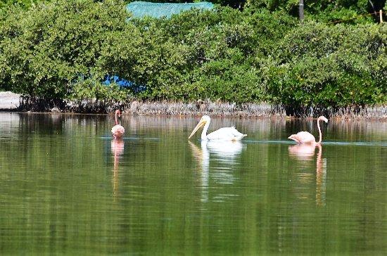 Chuburna, Mexiko: Migratory birds