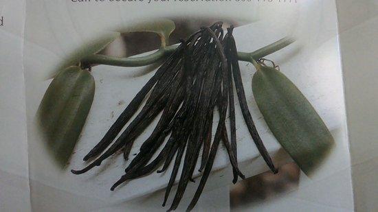 Paauilo, Hawái: Vanilla Beans