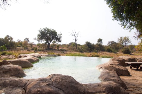 Timbavati Private Nature Reserve 이미지