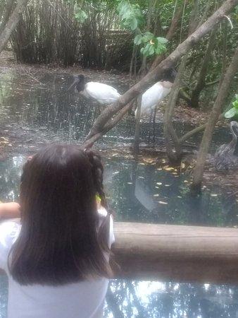 Isla Barú, Colombia: habitat natural y sin peligro