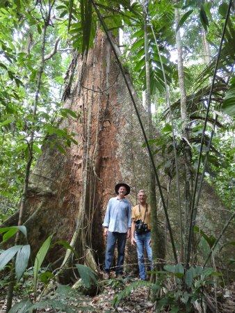 Beni Department, Bolivia: De heilige Mapajo tree van de community Asunción del Quiquibey.