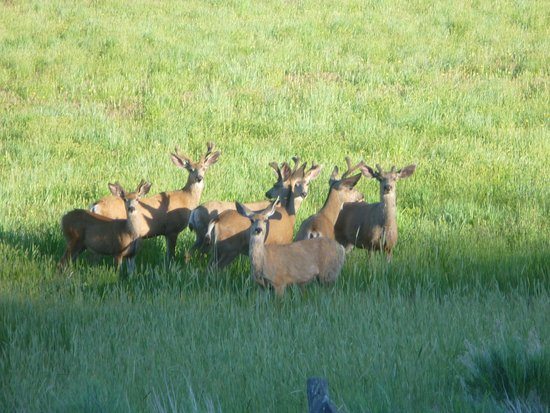 Best Western Paradise Inn: Take time to drive around and see all the local dear and elk herds in and around Beaver