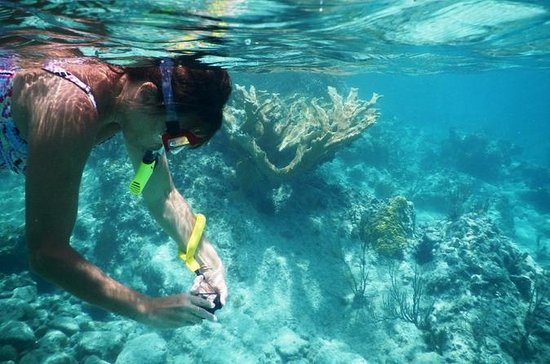 Private Tour: Batam Island Reef Snorkel and Kayak Day Trip from...