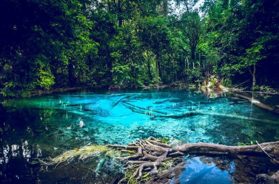 Krabi Emerald Pool, Hot Spring and Tiger Temple